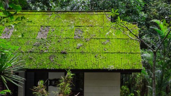 Entreprise démoussage toiture Saline